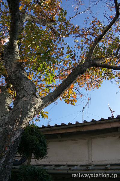 廃止を控えた三木鉄道・三木駅、秋で色づく駅舎前の桜