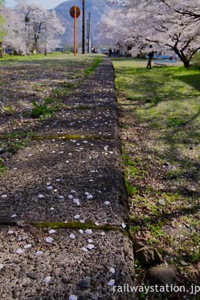 樽見鉄道 桜が散り落ちた谷汲口駅