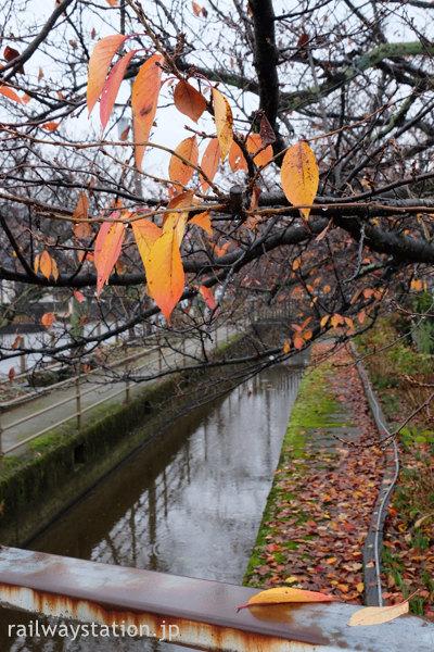 えちぜん鉄道・越前新保駅側を流れる芝原上水は秋の色…