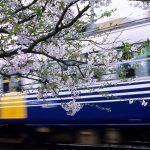 駅・桜旅2006 (1)~4月、えちぜん鉄道へ~