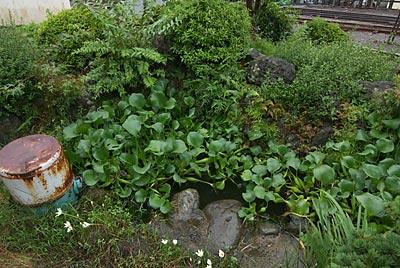 岳南電車・岳南富士岡駅、ミニ庭園の池