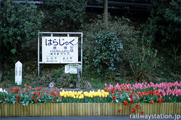 原宿駅3番線、国鉄型駅名標とチューリップの展示、そして原宿村