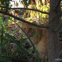 駅猫の誘惑~駅巡りの旅で出会った猫たち…~