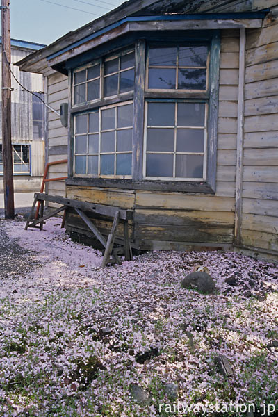 小坂精錬・小坂駅構内の建物の散った桜
