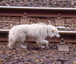 JR東海・中央本線(中央西線)・定光寺駅に迷いこんできた犬