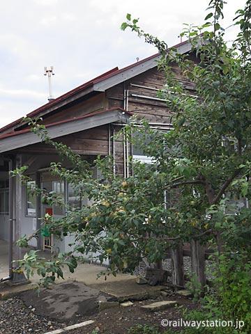 青森県、五能線・藤崎駅、駅構内の駅舎横に植えられたリンゴの木