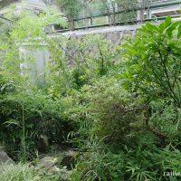 JR青梅線・鳩ノ巣駅、駅舎とホームの間の枯池