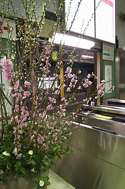 JR両毛線・伊勢崎駅改札口に飾られた早咲きの桜