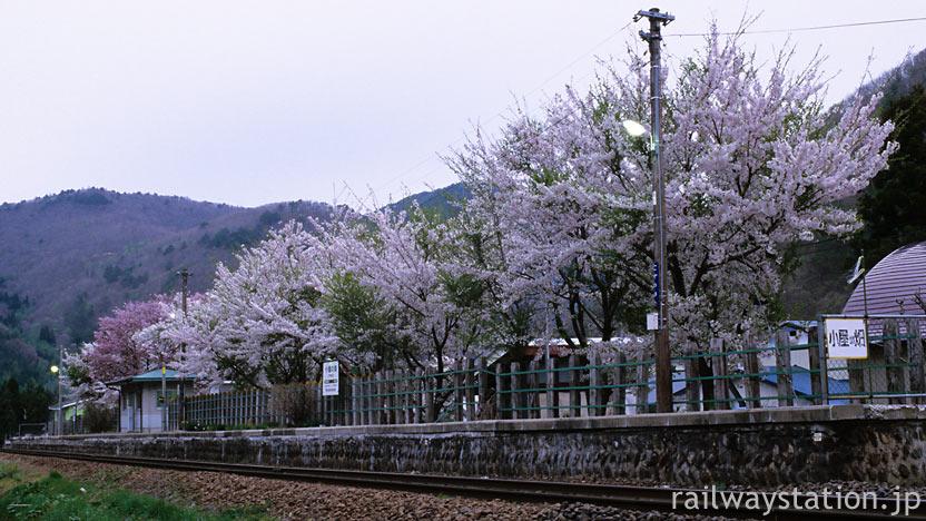 JR東日本・花輪線の無人駅、小屋の畑駅の桜並木