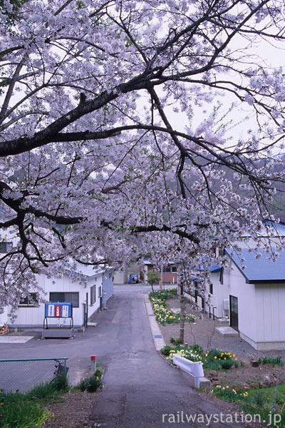 JR花輪線・小屋の畑駅、門のように咲く桜