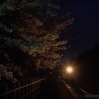 JR花輪線・小屋の畑駅、列車のライトに照らし出された夜桜