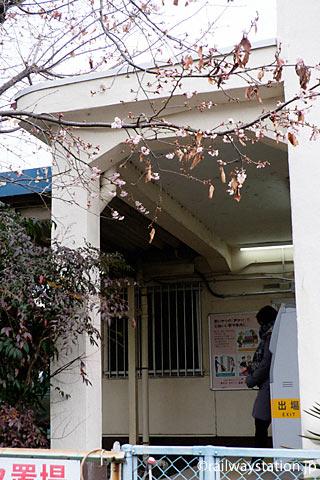 JR相模線・倉見駅、ぼころびはじめた早咲きの桜
