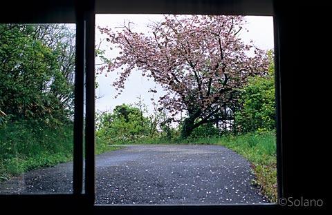 山形県遊佐町、桜咲き春の風情溢れる秘境駅、羽越本線・女鹿駅
