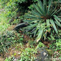 女鹿駅(JR東日本・羽越本線~秘境駅に埋もれる池のある庭園跡~