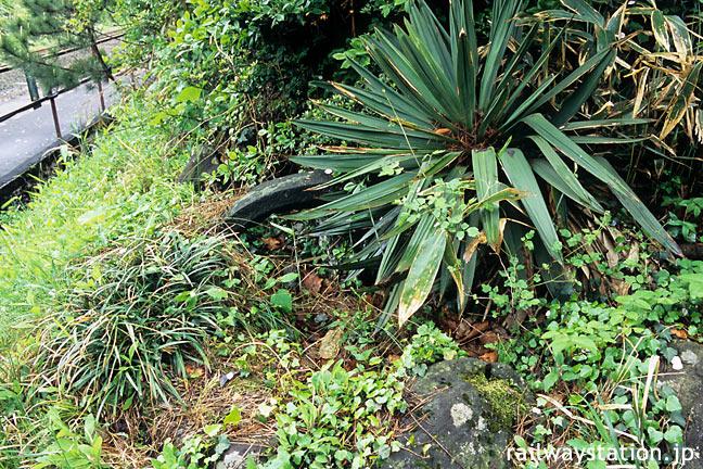 羽越本線の秘境駅、女鹿駅構内に埋もれる枯池
