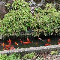 田端駅の鑑賞池(JR東日本・山手線、京浜東北線)