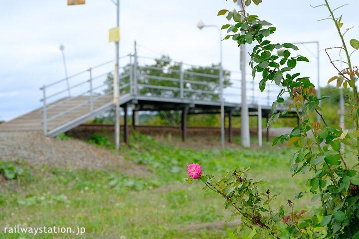宗谷本線・日進駅に咲く薔薇の花
