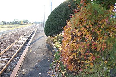 JR根室本線、秋深まり紅葉が色づく布部駅