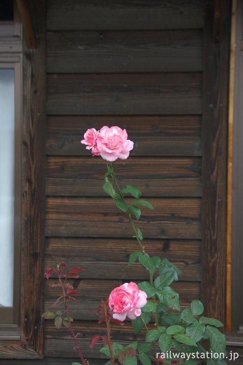JR日豊本線・豊前松江駅、駅舎前で咲く薔薇