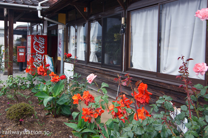 JR日豊本線・豊前松江駅、花壇で咲く薔薇