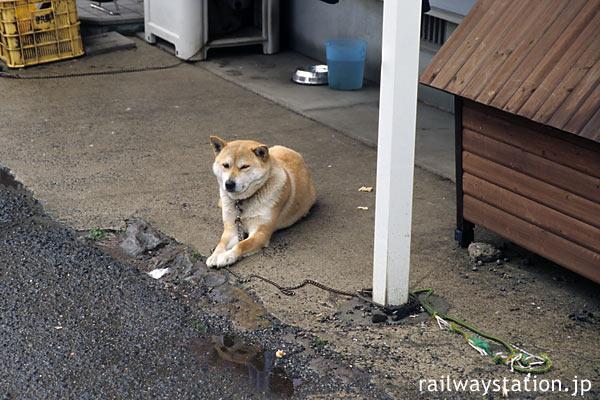 筑肥線・肥前長野駅前の飼い犬