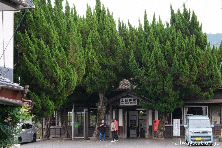 日豊本線・上臼杵駅、駅舎を覆いつくさんばかりのカイヅカイブキ
