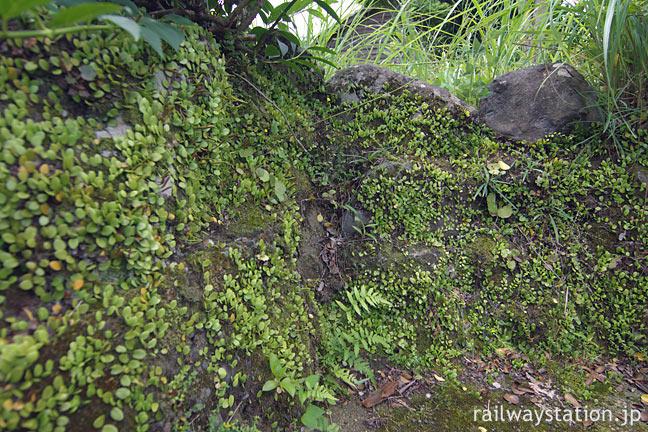 JR肥薩線・真幸駅、枯池に繁殖した苔