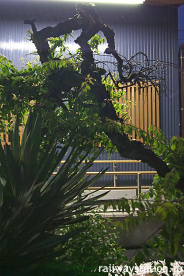 久大本線・小野屋駅、池庭の老木