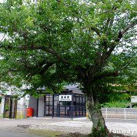 JR筑肥線・鹿家駅、旧駅舎時代からの桜の木と新しい簡易駅舎