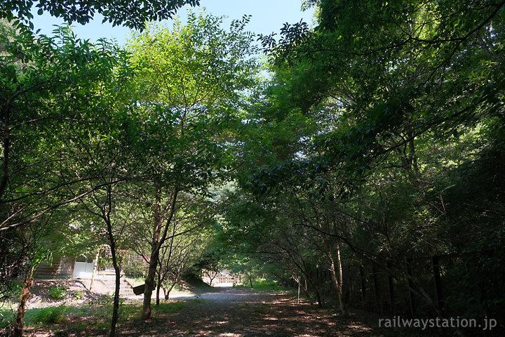 まさに秘境駅!深い木々が覆う土讃線の坪尻駅前(徳島県三好市)