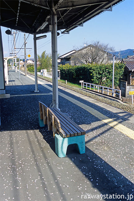 JR飯田線・茶臼山駅、ホームに散り落ちた桜の花びら