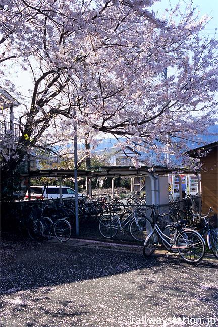 JR飯田線・茶臼山駅、桜で彩られる自転車置場