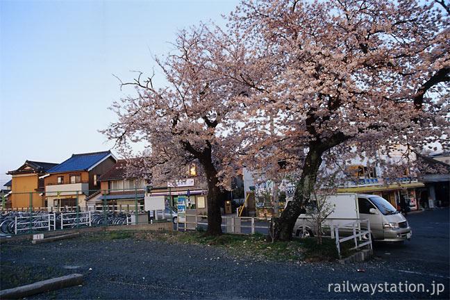 JR飯田線・小坂井駅、旧駅舎跡地に咲く2本の桜