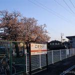 JR飯田線・小坂井駅、夕陽に彩られる桜とプラットホーム