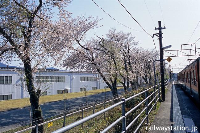 JR飯田線・野田城駅、ホーム沿いの桜並木と113系電車