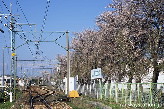 JR飯田線・野田城駅、駅南側から見た横浜ゴム敷地の桜並木