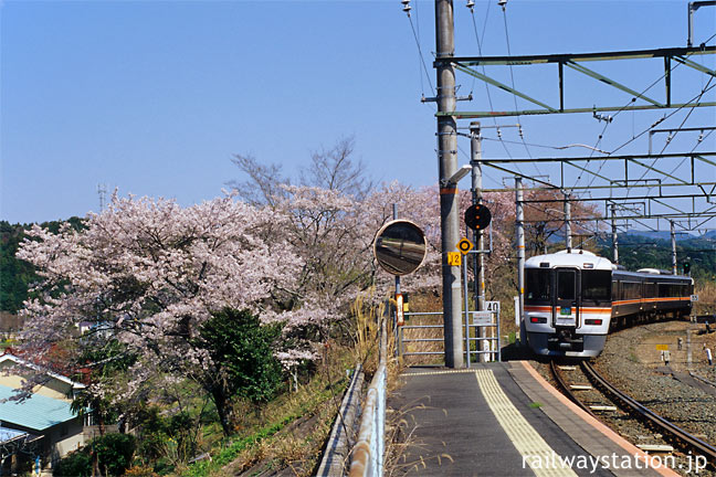 JR飯田線・大海駅、桜の横を通過する特急ワイドビュー伊那路