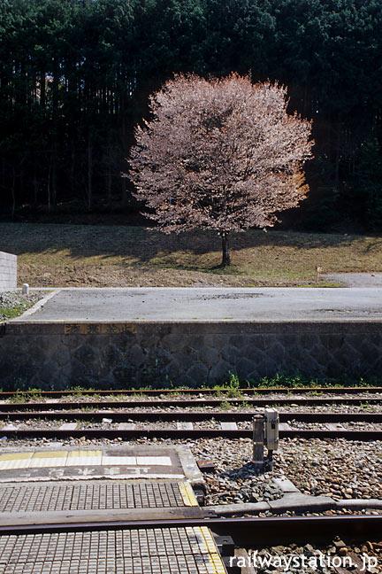 JR飯田線・大海駅、反対ホーム側の業務用スペースの桜の木
