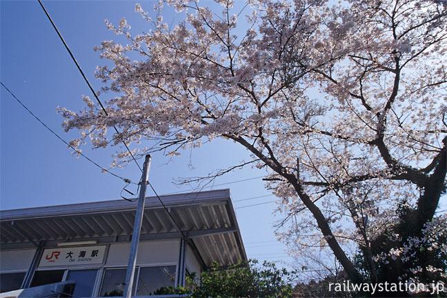 JR飯田線・大海駅、駅舎と満開のソメイヨシノ