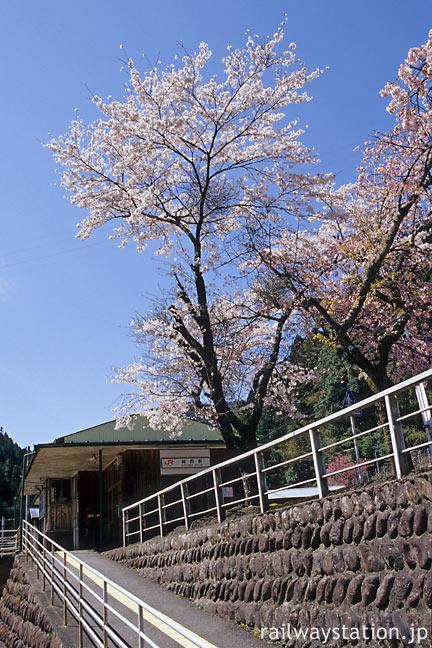 JR飯田線・城西駅、桜と木造駅舎