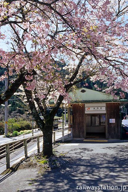 JR飯田線・城西駅、木造駅舎と八重桜の並木