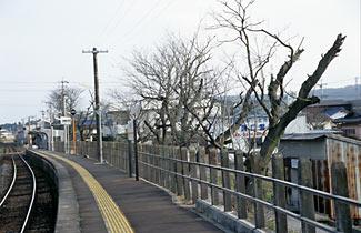 岐阜県可児市、太多線・下切駅(JR東海)。プラットホーム沿いの桜並木で知られた駅だが…