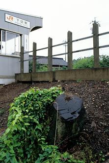 JR東海・太多線・下切駅、伐採された桜の切り株だけが残る…