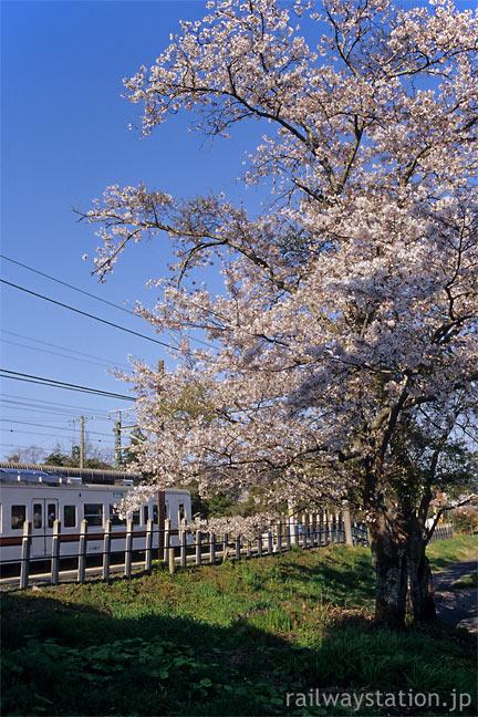 JR東海・飯田線・東上駅に咲く桜
