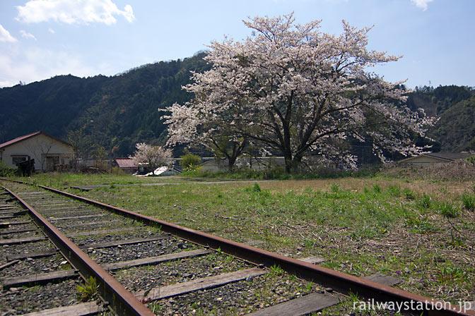 JR山口線・青原駅、側線跡の大きな桜の木