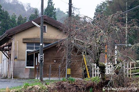 芸備線・道後山駅、枝垂桜の木と木造駅舎