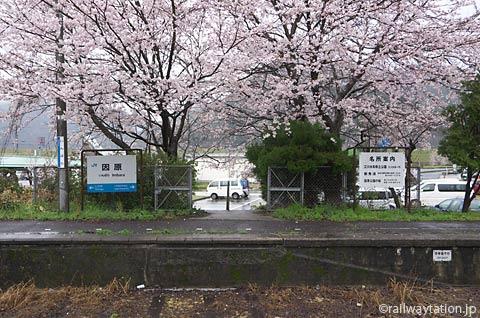 JR西日本・三江線・因原駅、桜満開の廃止ホームと駅名標
