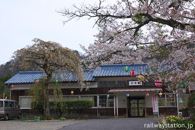 JR三江線・川平駅・提灯が吊るされた満開の桜