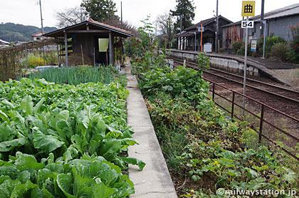 JR姫新線・美作千代駅、廃止された反対ホーム上の畑