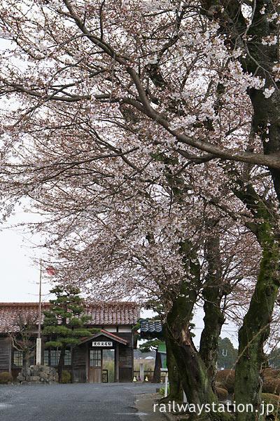 津山市、因美線・美作滝尾駅、駅前の桜並木と木造駅舎